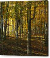 Spirits In The Woods Canvas Print
