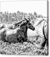 Spirits Of The Horse Canvas Print