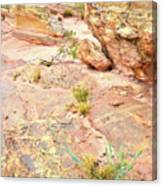 Splash Of Color In Valley Of Fire's Wash 3 Canvas Print
