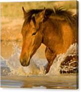 Splashdown Canvas Print