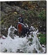 Splashed At Haystack Rock Canvas Print