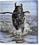 Splashing Fun Canvas Print