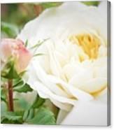 Splended Roses Canvas Print