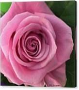 Splendid Rose Canvas Print