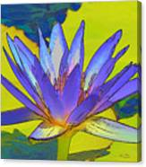 Splendid Water Lily Canvas Print