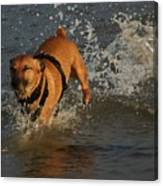 Splish Splash I Was Taking A Bath Canvas Print