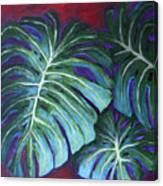 Split Leaf Philodendron Canvas Print