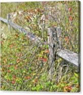 Split Rail Fence And Poison Ivy Canvas Print