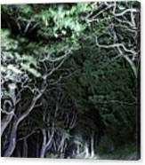 Spooky Trees Canvas Print