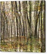 Spooky Woods Canvas Print