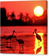 Spoonbills At Sunset Canvas Print