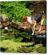 Sporty At The Lily Pond Canvas Print