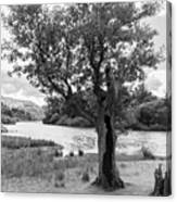 Spot The Woman And Her Dog- Behind The Tree Canvas Print
