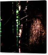 Spotlight In The Woods Canvas Print