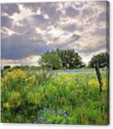 Spotlight On Spring Canvas Print