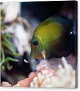 Spotted Aquarium One Fish Canvas Print