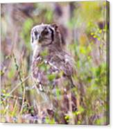 Spotted Eagle Owl  Canvas Print