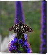 Spotted Moth On Purple Flowers Canvas Print