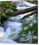 Sprague Creek Glacier National Park Canvas Print