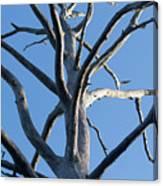 Sprawling Dead Tree Canvas Print