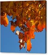 Spray Of Autumn Leaves  Canvas Print