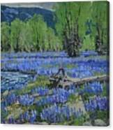 Spread Creek Lupine Canvas Print