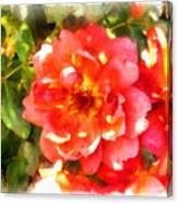 Spread Petals Of A Red Rose Canvas Print