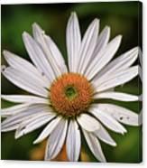 Spread Your Petals Canvas Print