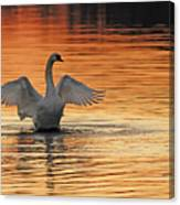Spreading Her Wings In Gold Canvas Print