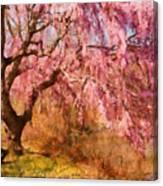 Spring - Sakura - A Beautiful Spring Day  Canvas Print