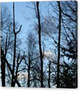 Spring 09  Tree Skyline Canvas Print