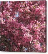 Spring 15 Canvas Print