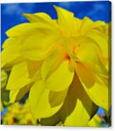 Spring 2015-pic19 Canvas Print