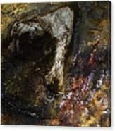 Spring 2017 169 Canvas Print