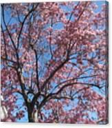 Spring 4 Canvas Print