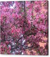 Spring 7 Canvas Print