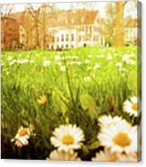 Spring. A Medow Spread With Daisies In Baden-baden, Germany Canvas Print