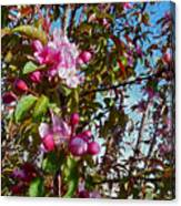Spring Apple Blossoms- Spring Flowers Canvas Print