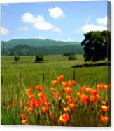 Spring At Gainey Ranch Canvas Print