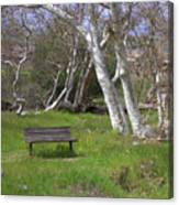 Spring Bench In Sycamore Grove Park Canvas Print