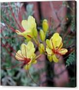 Spring Blooms Yellow Red 052814a Canvas Print