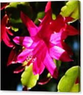Spring Blossom 15 Canvas Print