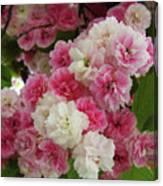 Spring Blossom 3 Canvas Print