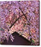 Spring Blossom Canopy Canvas Print