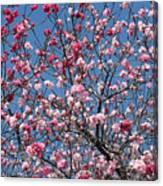 Spring Blossoms Against Blue Sky Canvas Print