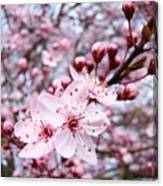 Spring Blossoms Art  Pink Tree Blossom Baslee Troutman Canvas Print
