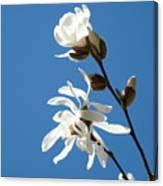 Spring Blue Sky Floral Art Print White Magnolia Tree Baslee Troutman Canvas Print