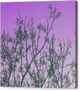 Spring Branches Lavender Canvas Print