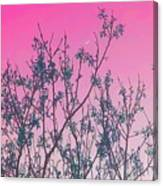 Spring Branches Rose Canvas Print