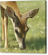Spring Buck Canvas Print